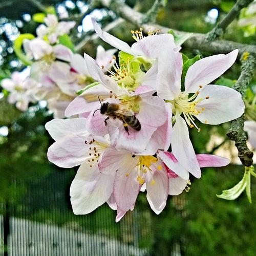Flores de Primavera El Cubillo Segovia
