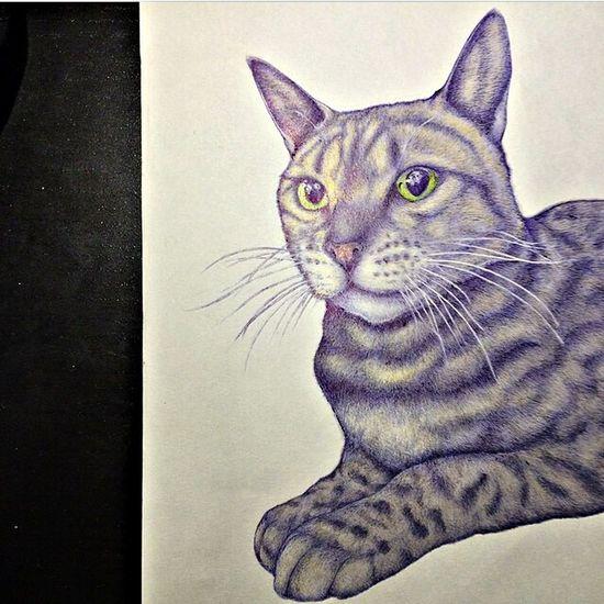 Illustration Drawing Catdrawing Shawty