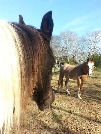 Horse horses paint horse farming ranching equestrian grazing