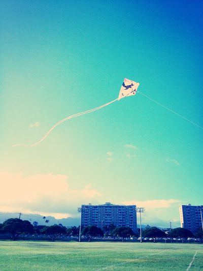 Kite flying today, my penguin kite
