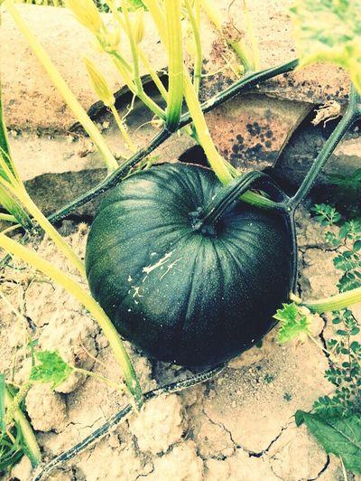 Pumpkin Nexthalloween LoveNature