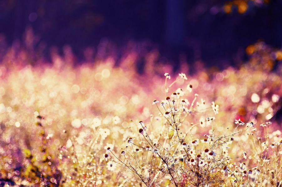 Polaroid Camera Natural Beauty Beautiful Flowers