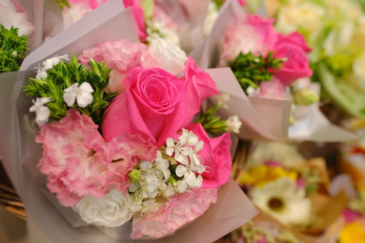 Close-up of pink roses