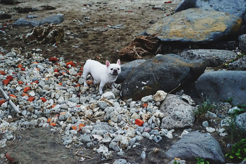 View of a white cat on rock
