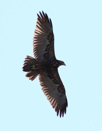 Birds Of Prey Birds Birds In Flight