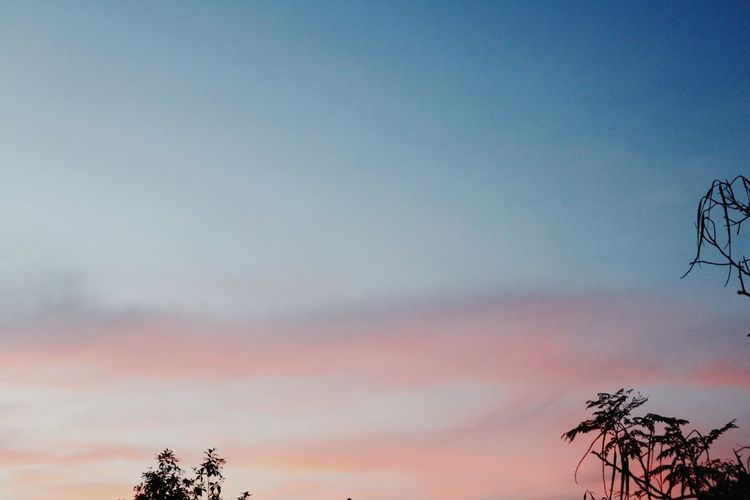 Sky Tree Beauty In Nature Nature Tranquility Scenics Outdoors Low Angle View Tranquil Scene Sunset Cloud - Sky No People Silhouette Growth Landscape Day