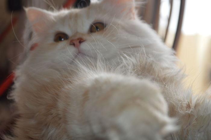 Cat Lovers Ctue Fluffy Cat Love Scratch