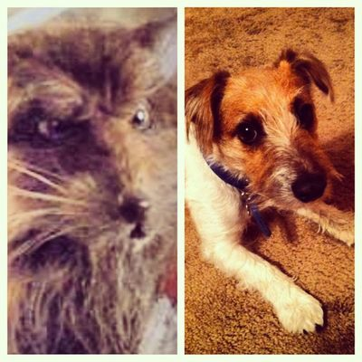 Picstitch  if Tobie Lee doesn't look like Splinter from TMNT I don't know what dog does. Hahahha Icant ??? thanks @gtlsoccer @ashleyshank1
