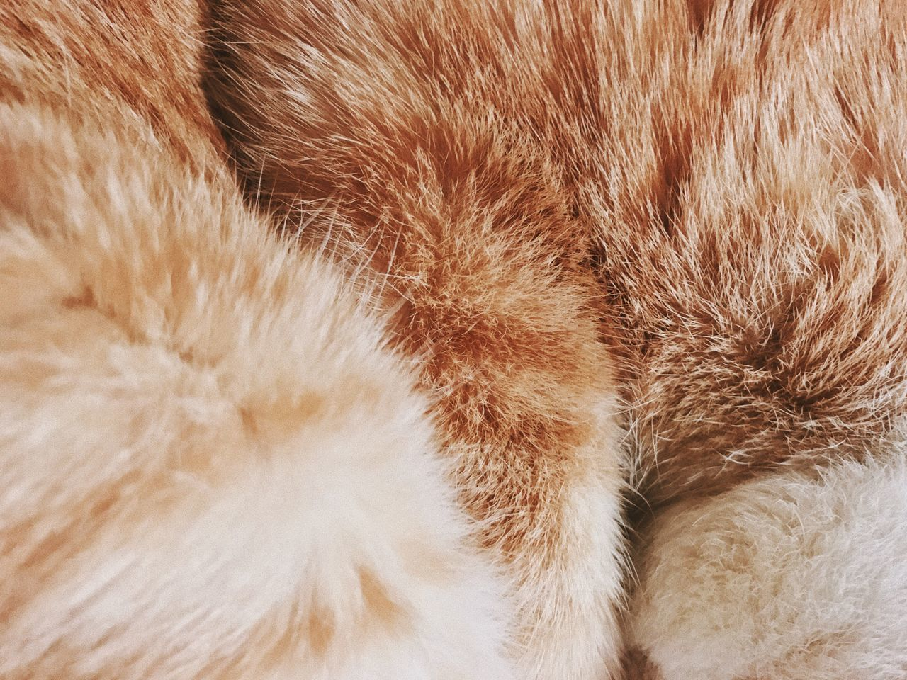 domestic cat, backgrounds, indoors, pets, animal leg, no people, close-up, mammal, feline, domestic animals, paw, animal themes, pattern, full frame, one animal, day, nature