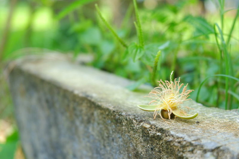 Betel nut flower Betel Nut Betel Nuts Flower Flower Insect Close-up Animal Themes Plant Wildflower Uncultivated Dandelion Seed
