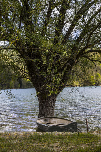 Tree by lake in forest