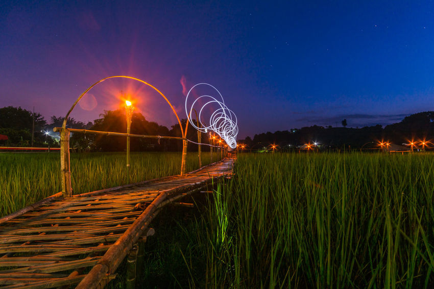 Bamboo Bridge in Paddy Field, Chiang Rai, Thailand. Bamboo Bridge Bamboo Bridge In Paddy Field, Chiang Rai, Thailand. Blue Bridge Curve Grass Green Green Color Growth Illuminated Long Night Outdoors Paddy Field Plant Railroad Track Railway Track Scenics Sky Solitude Surface Level Train Track Tranquil Scene Tranquility