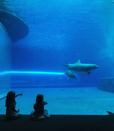 Live For The Story Sea Underwater UnderSea Sea Life Shark Blue Animal Wildlife People Dolphins Girls Mother & Daughter Scuba Diving Water Acquario Di Genova Capture The Moment