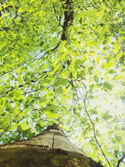 Forest Forestwalk Forest Photography Forests Green Wood Plants Sunlight Sun Cubefotografie Wald Waldspaziergang Baum Bäume Holz Sonnenlicht Blätter