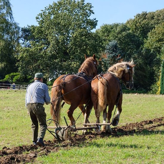 Hard work Plow Plough Pflug Pferde horses soil erde