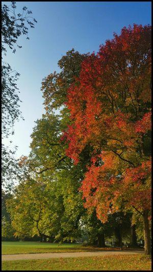 Autumn🍁🍁🍁 TreePorn Tree_collection  EyeEm Best Shots - Autumn / Fall Autumn Colors Orange Stunning Tree