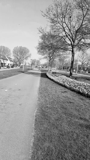 Bicycle Path Trees And Sky Birds On Branches ❤ Flowers 🌸🌸🌸 Geese People On Bikes Lantern Cars EyeEm Best Shots - Black + White Black And White Photography The Week On EyeEm EyeEm Gallery