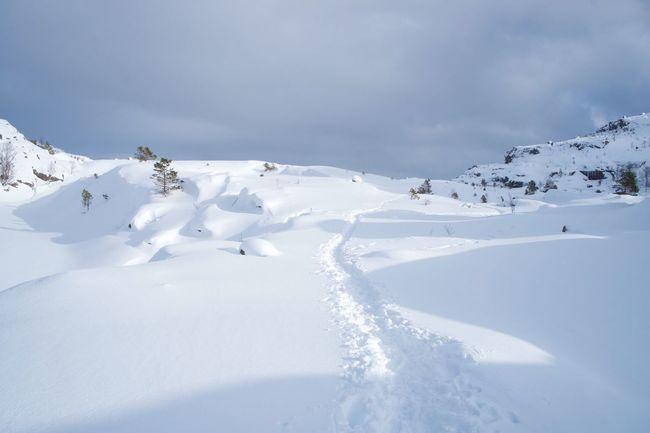 Norway Snow Winter Cold Temperature Beauty In Nature Tranquil Scene Scenics - Nature Powder Snow Preikestolen Idyllic Tranquility