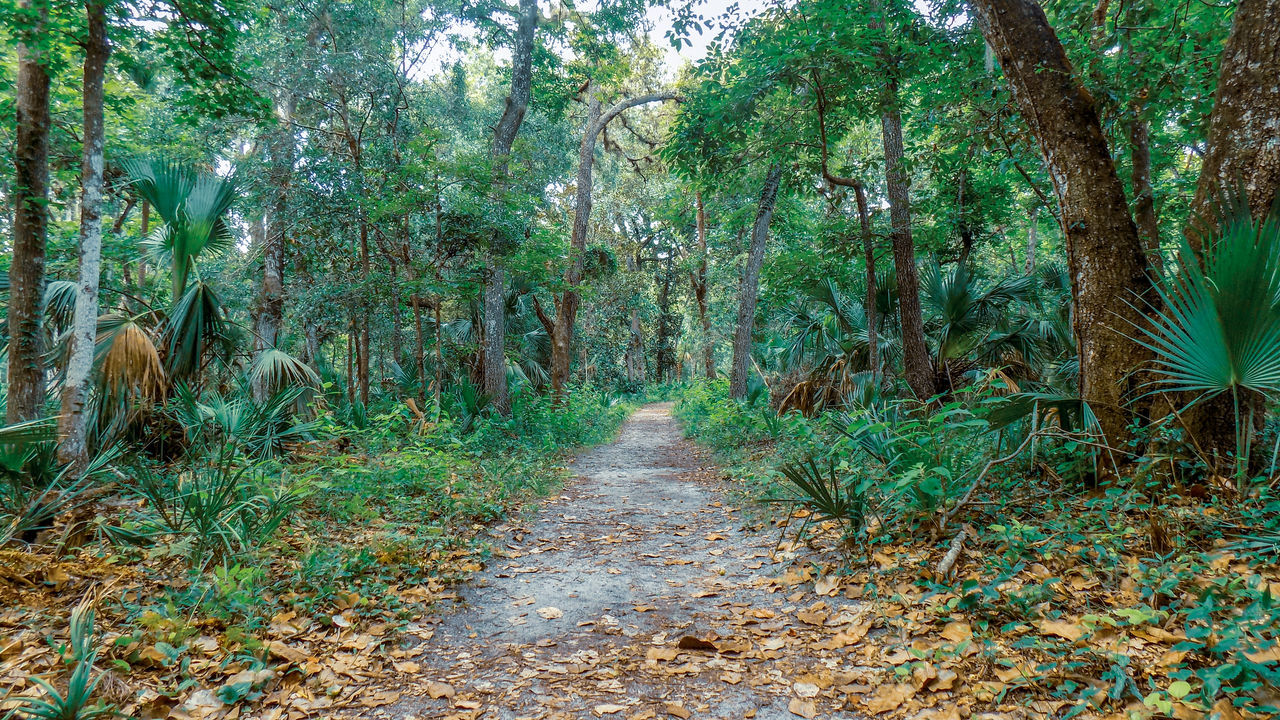 FOOTPATH AMIDST PLANTS IN FOREST