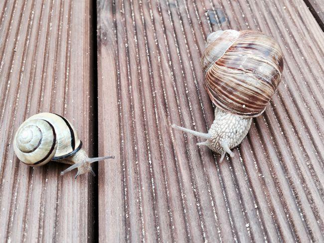 Ruhe Entschleunigung Langsam Leben Beobachten Entdecken Suchen  Pärchen EyeEm Selects Shell Animal Shell Snail Animal Wildlife Mollusk Wood - Material Pattern No People Animal Animal Themes High Angle View Animals In The Wild Close-up Day Outdoors