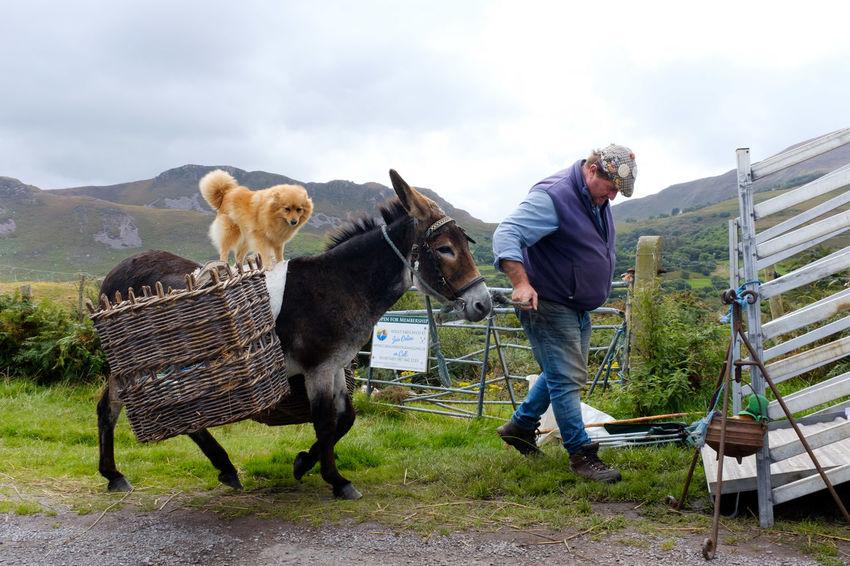 County Kerry, Ireland, 2017 Donkey Dog❤ Dog Streetphotography Street Photography Ireland Working Full Length Men Farmer Agriculture Standing Occupation Rural Scene Walking Mature Men