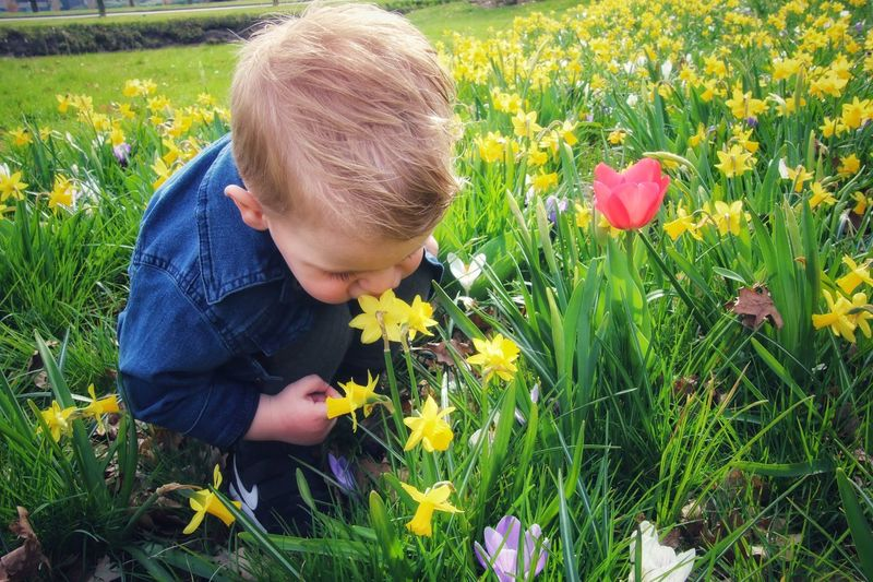 dad, i want to smell the flowers.. This Is Family Flower Head Flower Child Childhood Blond Hair Males  Boys Rural Scene Meadow Field Wildflower Crocus In Bloom Plant Life