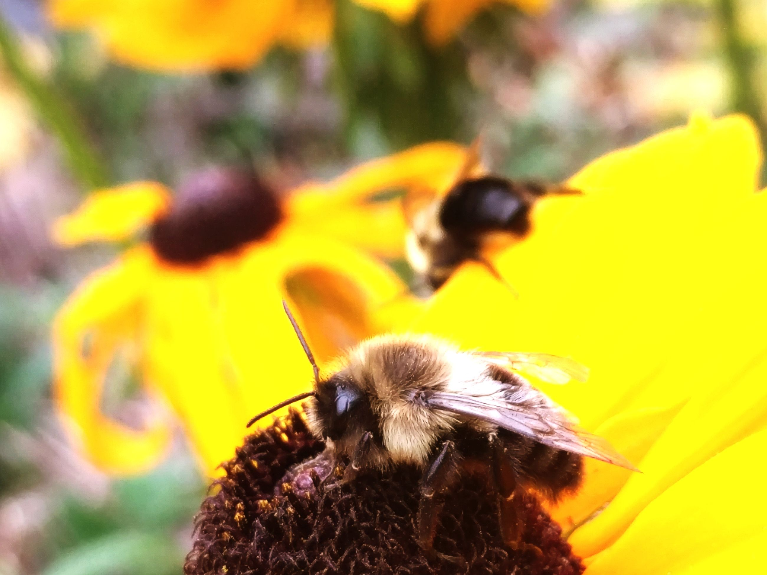 animals in the wild, insect, animal themes, yellow, flower, one animal, nature, outdoors, close-up, bee, day, petal, animal wildlife, fragility, growth, beauty in nature, no people, bumblebee, flower head, pollination, freshness