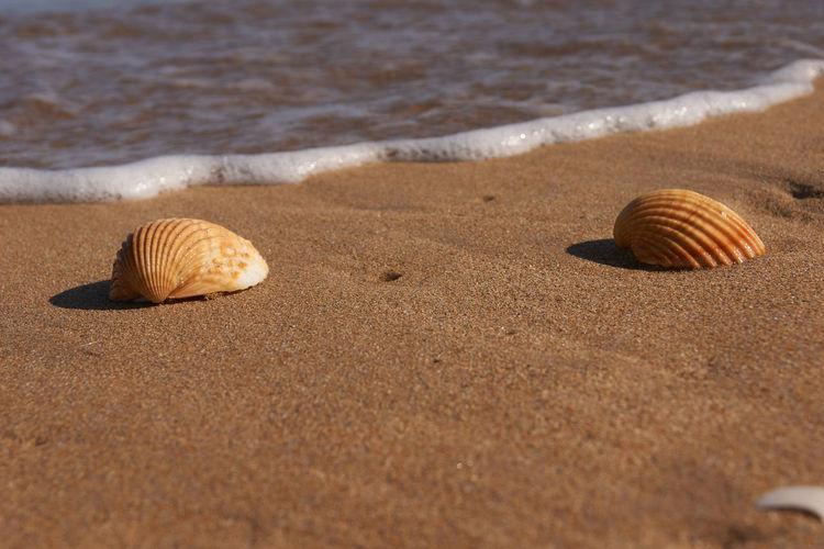 Surface level of seashell on beach
