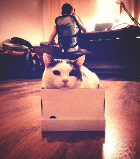 A boxer Boxer Thug's Life Box - Container Cat Cat And Box Mammal Representation Domestic Domestic Animals No People Art And Craft Pets Indoors  One Animal