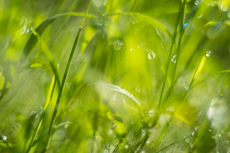 Close-up of wet plants on field during rainy season