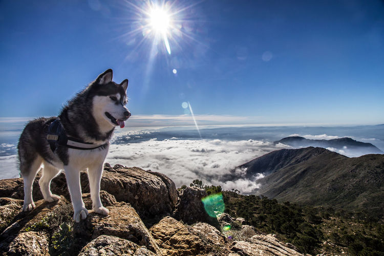 Dog On Rocks Against Sky During Sunny Day