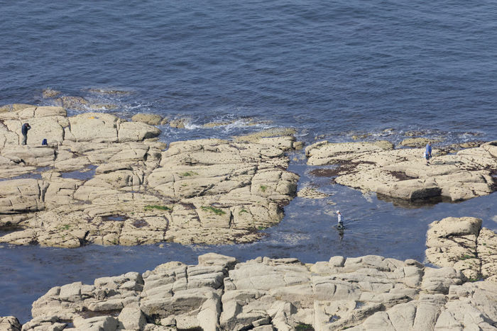 Aerial view of angler on flat rocks in sea at low tide in Barfleur, France. People enjoy catching fishes and looking for mussels and shellfishes in the tidal pools. Aerial View Angler Atlantic Ocean Beauty In Nature Cliff Coastal Coastal Feature Fisherman Fishing Rod Flat France High Angle View Low Tide Nature Normandy People Plain Rock Rock - Object Rock Formation Rocky Coastline Sea Small Group Of People Tidal Pool Water