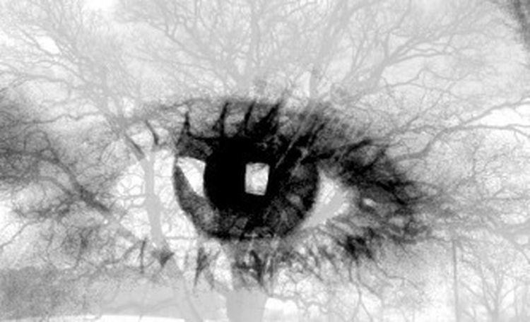 Tree In My Eye