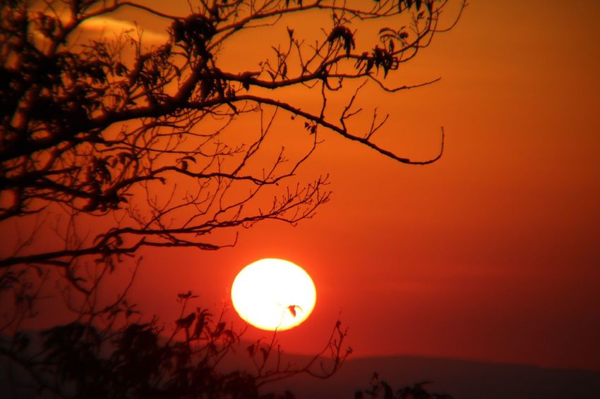 Sun Sunset Moon Orange Color Scenics Tree Silhouette Circle Sky Beauty In Nature Bare Tree Outdoors Nature Tranquil Scene No People Branch Illuminated Solar Eclipse Astronomy From My Point Of View EyeEmNewHere EyeEm Best Shots EyeEm Best Shots - Nature Perspectives On Nature Nature_collection
