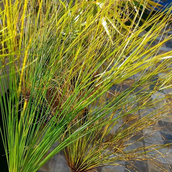 Betosalvestrini prueba de la Cámara del Asus Zenfone2 Swocs NeverSettle Quickphoto Green Plants Komplex