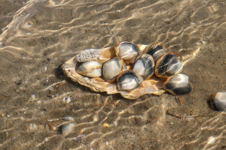 High angle view of shells on beach