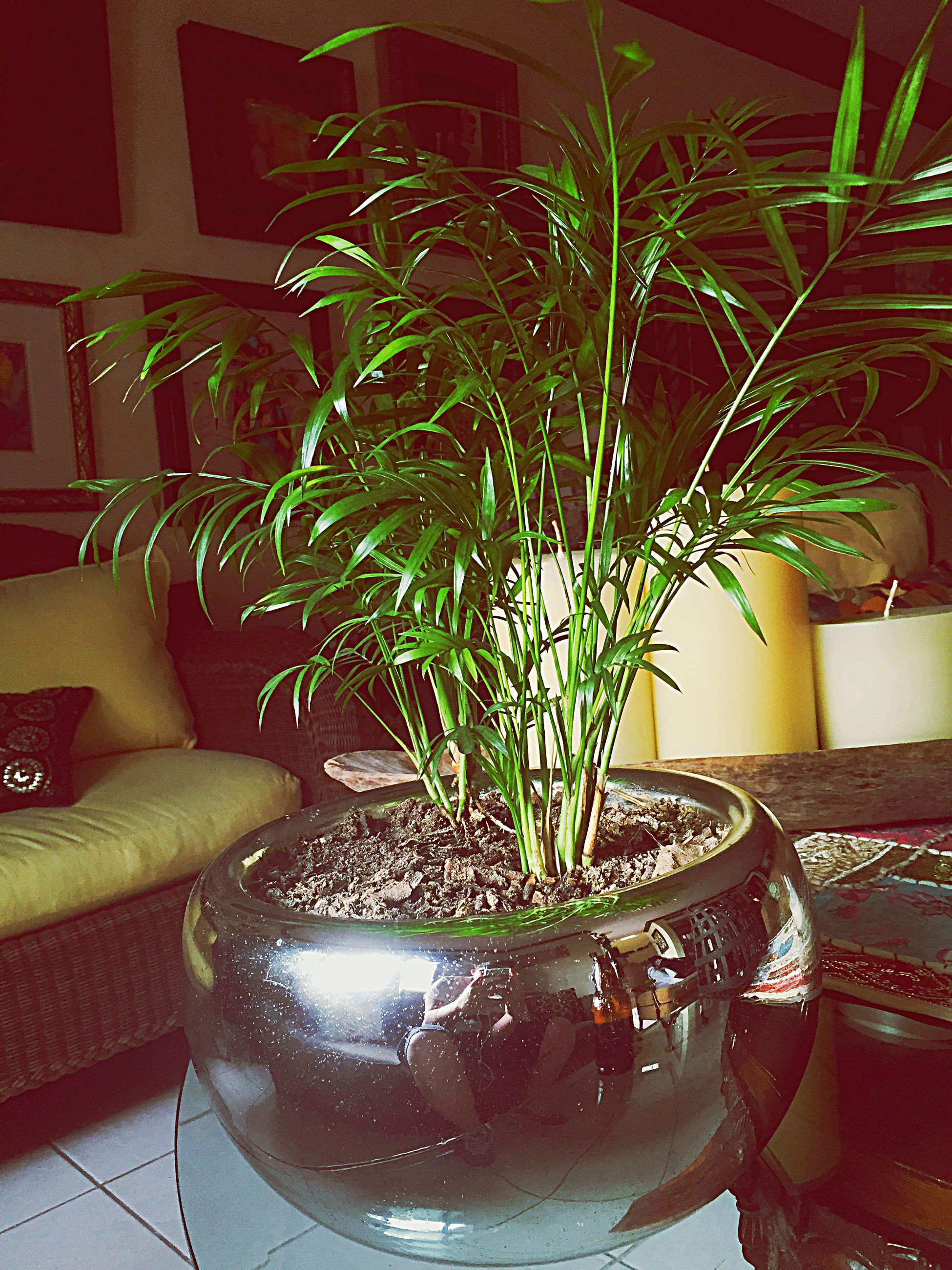 potted plant, indoors, table, vase, plant, home interior, flower pot, growth, window, chair, glass - material, house, houseplant, flower, decoration, no people, pot plant, absence, transparent, window sill