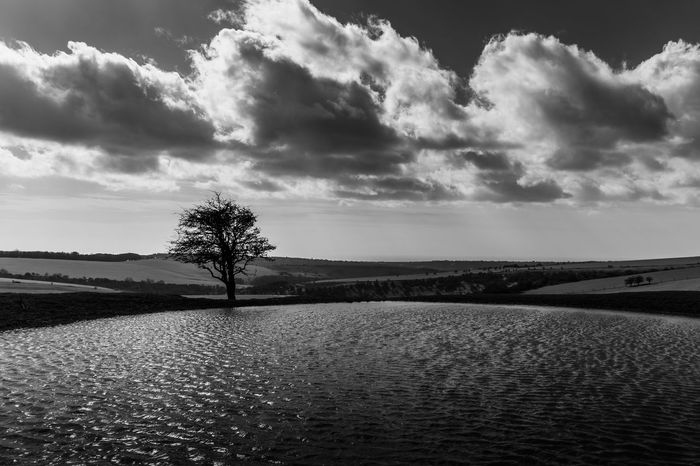 Dew Pond on the South Downs between Jack and Jill windmills and Ditchling beacon. Monochrome Blackandwhite Trees Landscape Dew Pond South Downs