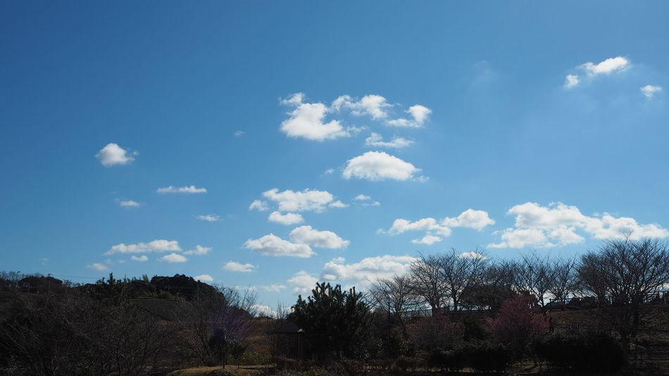 Stratocumulus Clear Sky Skyporn Cloudporn Skyscape Skylover Clouds And Sky Sky And Clouds Cloudscape Cloudlover Sky No Edit/no Filter Cloudskape Mirrorless Beauty In Nature Japan
