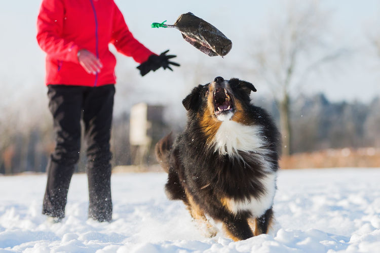Person playing with dog on snow covered field