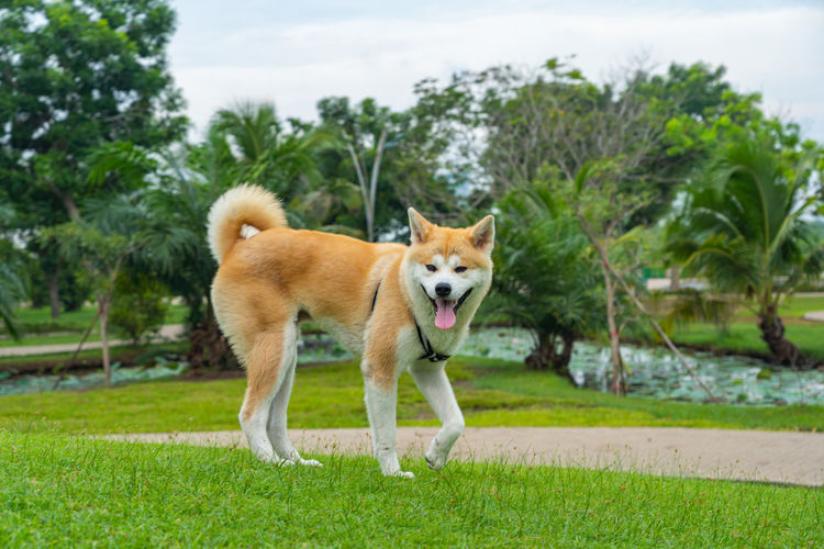 View of a dog standing on land