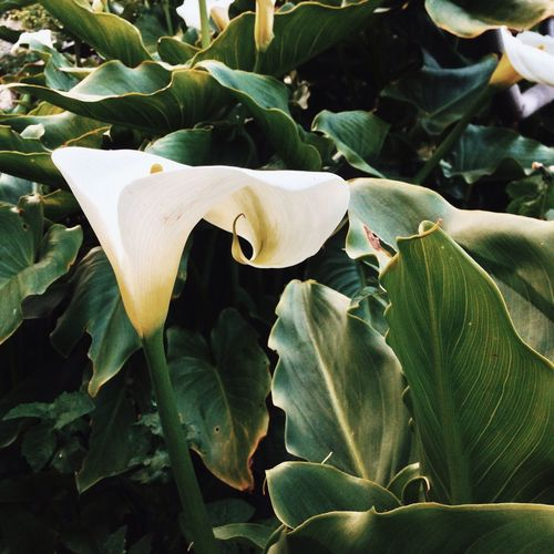 Growth Leaf Nature Plant Flower Beauty In Nature Green Color Fragility Freshness Petal Outdoors Close-up Blooming No People Day Flower Head