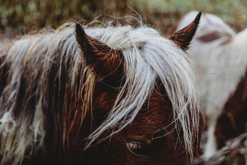 Horse Domestic Domestic Animals Animal Mammal Animal Themes Pets Working Animal Animal Wildlife Livestock Mane One Animal Vertebrate Focus On Foreground Day Animal Hair Herbivorous Hair Close-up Animal Body Part