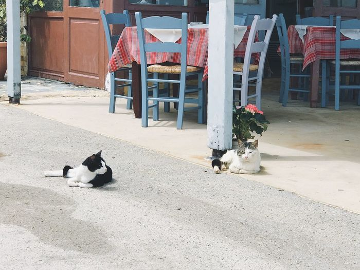Cats life Furnitures Relaxed Moments Relaxation Greece Street Scene Street Laying Down Outdoors Restaurant Cats Pets Domestic Domestic Animals Animal Mammal Animal Themes Architecture Built Structure Feline Domestic Cat Day Sunlight Nature No People Canine Cat
