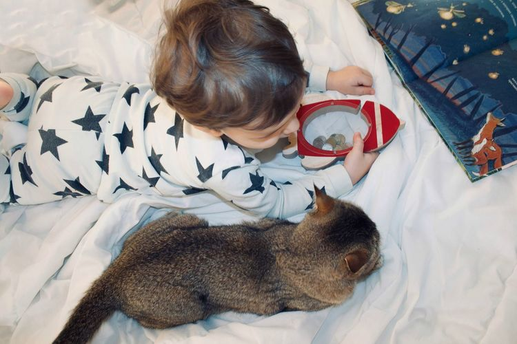 Directly above shot of boy holding piggy bank by cat on bed