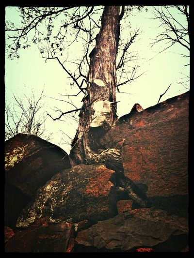 Tree Growing In Old Wall Of Ruins
