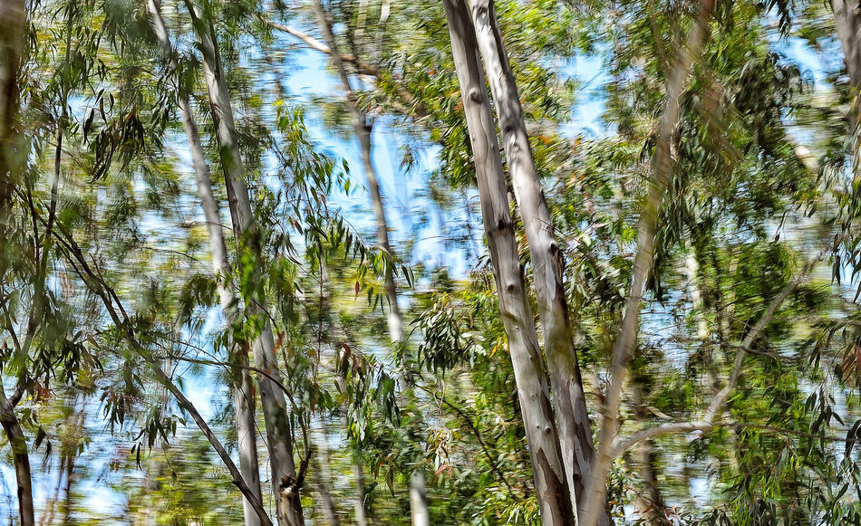 Eucalyptus Tree From The Car Window Green And Blue Motion Studies Nature Passing By Summer Turkey