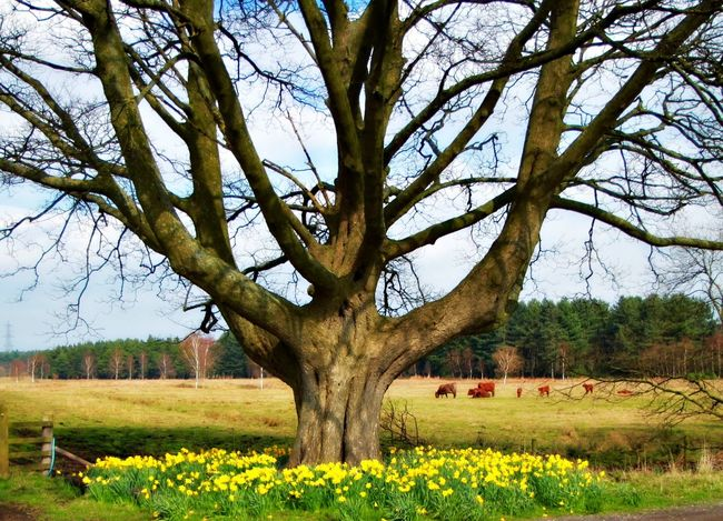 Today is my Brothers Birthday. This is the World Tree In Knowsley Park Merseyside where we grew up. This was Chris' favourite tree. When he died we scattered some of his ashes under the tree and planted a few Daffodils. When I went to check last week a whole ring of Daffodils had grown around his tree :). Happy Birthday Chris x Beautiful Nature Photography Sentimental Values Of Life CantSleep