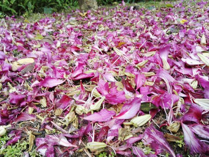 Flowers Fall Beauty