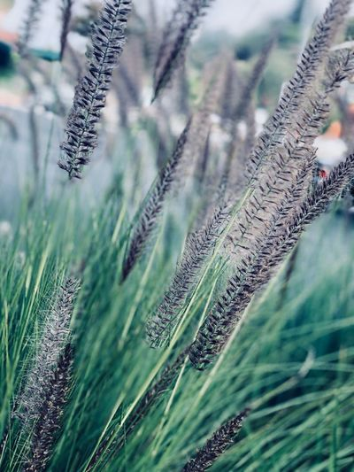 Plant Growth No People Nature Close-up Beauty In Nature Day Vulnerability  Focus On Foreground Land Tree Green Color Field Outdoors Freshness Selective Focus Tranquility Fragility Grass Flowering Plant